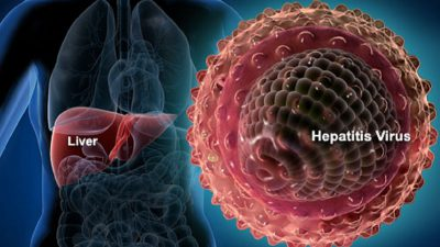 liver and hepatitis